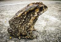 フグにキノコ、用心したい自然界の毒。しかし、がんに有効なカエルの毒も!?