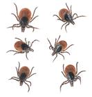 デング熱より怖い致死率30%を超える新種のウイルス。その媒介者は?