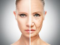 肌の細胞を30歳若返らせるのに成功! iPS細胞で夢のアンチエイジングが実現?