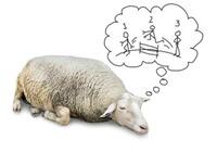 眠りたいなら「羊」を数えてはいけない! 不眠・寝不足時代の正しい睡眠方法