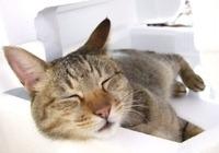 眠れない、眠りが浅い、眠りたくない...... 世界一短い日本人の睡眠時間、あなたは大丈夫?