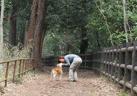 見つめ合って「愛情」ホルモンが増加、人と犬の心の絆を証明!?