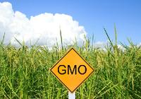 遺伝子組み換え食品の現状とは?「ザル規制」で中韓に遅れをとる日本!