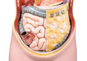 腸内細菌は約300種類、約100兆個以上!  腸内フローラの役割は何?