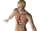 腸が「第2の脳」と呼ばれる理由は? 目には見えない「脳腸相関」のメカニズム