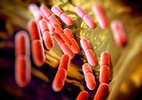 乳酸菌で腸内環境を改善、がんも予防!(新宿大腸クリニック 後藤利夫院長)