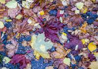 定年退職後の夫が家にいるストレスで引き起こされる「濡れ落ち葉」とは!?