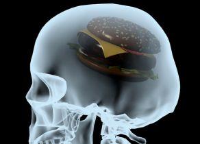 """ジャンクフードで脳の""""海馬""""が縮小! アルツハイマー病の発症リスクにも影響"""