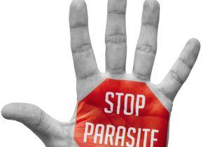 「ぎょう虫検査」全国集団検査が廃止 感染を防ぐには?