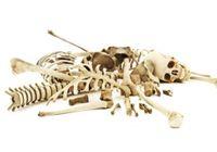 白骨死体から性別、年齢、身長までわかる! 骨盤を見れば男か女かほぼ100%で解明