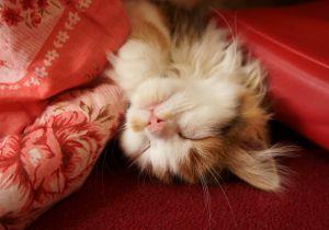 「こたつで寝る」と突然死する?脳梗塞や心筋梗塞のリスクを上げる可能性
