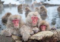 """ニホンザルには閉経がない~日本人の長寿は""""自然の摂理""""に反している!?"""