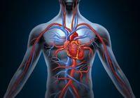 血流が悪くなる冬場に多い「大動脈瘤破裂」の恐怖! 俳優の阿藤快さん、藤田まことさんも帰らぬ人に……