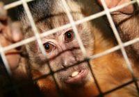サルを用いた実験で「自閉症遺伝子」の解明に〜霊長類モデルには倫理的問題も