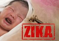 ジカ熱、国内初の感染者が! 米では性交渉による感染の疑いも指摘されている!