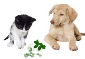 愛犬にビタミンCは必要なし!? ペットに必要なサプリメントは人間とは異なる