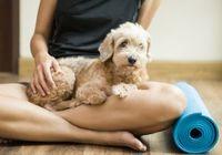愛犬と一緒にヨガポーズ、ストレス緩和に新たな健康管理 「ドガ」に世界が大注目!