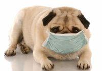 """犬も花粉症で「眠れない」!? 快適生活には""""信頼できる獣医""""との長い付き合い"""