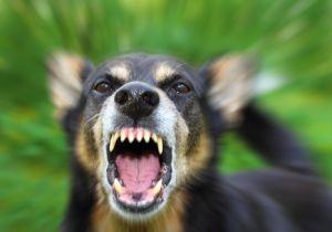 発病したら確実に死亡! 狂犬病ワクチンを接種していない犬が増えている不気味