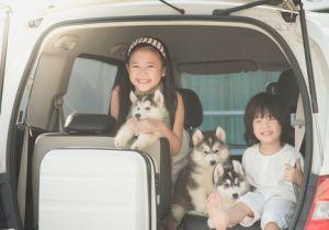 避難所では疎まれる「ペット」の現実~全国初の「犬の殺処分ゼロ」達成した熊本市でさえ