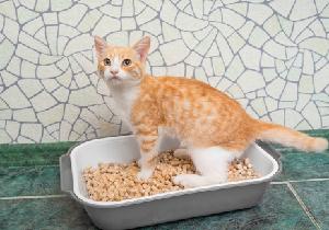 ネコ好きはキレやすい? ネコの糞に潜む寄生虫で衝動的に激怒する病気に!?