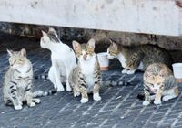 観光客殺到の「猫の島」で野良猫200匹に不妊手術! 香川県・男木島で何が起きているのか?