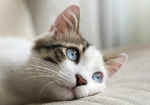 """""""虐待""""猫カフェが営業停止! 里親を探すカフェが猫に幸せを運ぶ"""