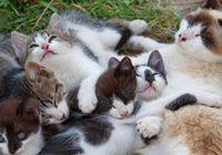 大阪に「ネコビル」がオープン! ネコを飼うと心臓病のリスクが40%も軽減