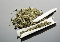 タバコよりも安全なマリファナ(大麻)は合法化すべき? 健康被害は歯肉疾患だけ!? 精神疾患は?