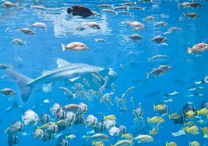 ロンブー田村、ココリコ田中も苦労体験の生態調査 魚類の生物種や絶滅危惧種には「環境DNA分析法」がある