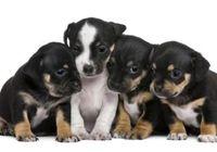 劣悪な環境で決まる<命の値段>~ 「パピーミル(子犬製造場)」最低限のコストで産まれる犬たち