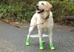灼熱のアスファルト、愛犬の肉球火傷が危ない! ドッグブーツは是か非か?