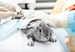 日本では<ウサギの眼球がただれる様子>を観察! 欧米は化粧品の動物実験を廃止