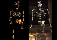 DNA鑑定秘話〜ルーシーは木から落ちて死んだのか? 318万年前に生息した初期人類の死の真相