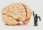 ヒトの「大脳」はなぜ巨大化したのか? 脳が大きければ知性も高い?