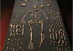 上半身は「類人猿」、下半身は「ヒト属」!新たに発見された「ホモ・ナレディ」は新種の人類か?
