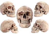 紀元前の沈没船から古代人の「頭蓋骨」発見!最新「DNA鑑定」で人種・性別・年齢・出生地も解明?