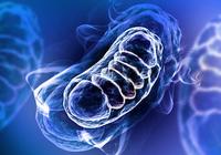 母から子へ遺伝する難病「リー症候群=ミトコンドリア病」とは? ミトコンドリア研究で10名以上がノーベル賞に