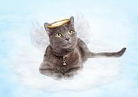 猫の死因のトップは「あの病気」だった! 5~6歳で発症し、そのうちの5~7割が慢性化する