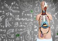 医学教育で解剖学が軽視されている!2030年、身体の構造を知らない医師ばかりになる!