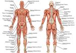 「解剖学」の基礎知識こそが実生活の中での「社会解剖学」へとつながっていく