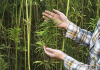 私たちの身の回りには大麻があふれている! 冷静に大麻の可能性について考えよう