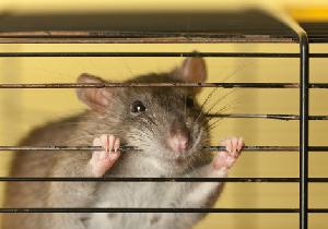 もだえ苦しむ実験動物たち~日本でも苦痛を軽減するシステムの確立を!
