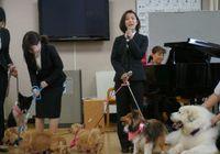 この春、犬4匹が<入社>~人々を元気にするセラピー犬、ファシリティドッグの活躍