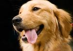 全国初! がん探知犬によるがん検診~試験管に入った尿を嗅ぎ分け判定