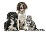 犬・猫の認知症は早期発見・予防が決め手! ペットの認知症の予防方法・症状とは?