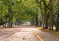 都市の緑化で「喘息」の入院率が低下!「樹木の多さ」が大気汚染防止に絶大な効果を発揮