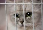災害時に不安を抱える飼い主は9割以上! 自分とペットたちの避難計画を立てよう!