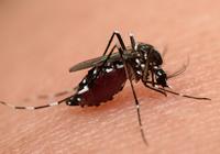 蚊に刺されやすいのは「中間所得層」だった! 世帯収入の差との因果関係は?