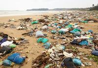 スタバも禁止へ! レジ袋・ストロー・カトラリー……プラゴミが世界の海を殺す日